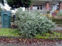 newsflash christmas tree recycling