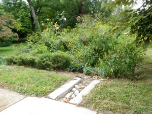 Lincoln Avenue rain garden and outlet scupper