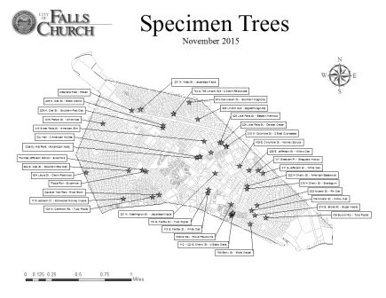 Specimen Tree Map thumbnail